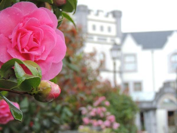beautiful gardens in muckross