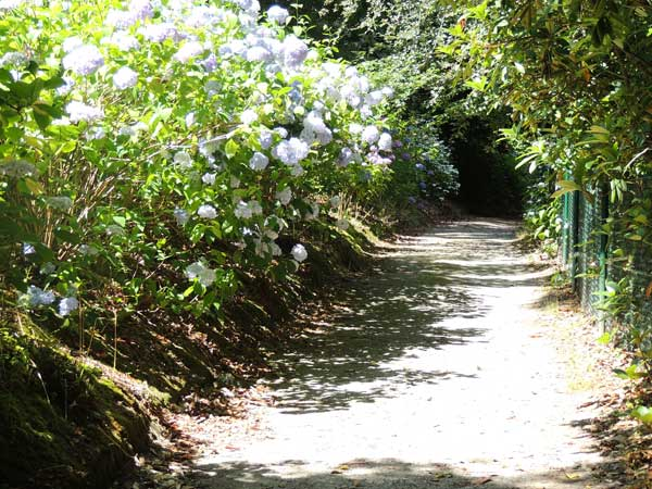 long walk of the gardens
