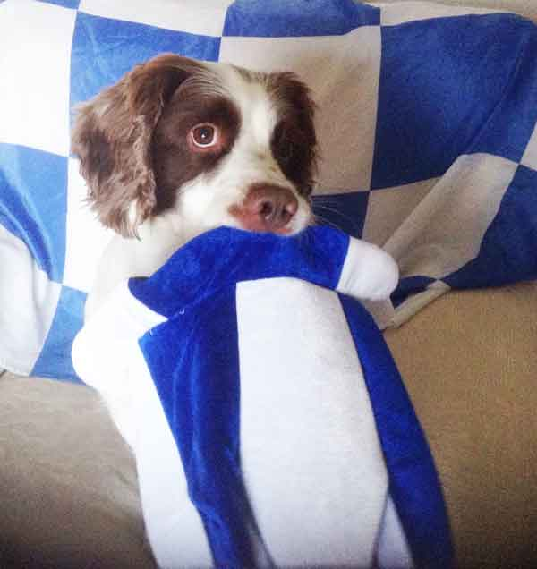 waterford hurling supporter